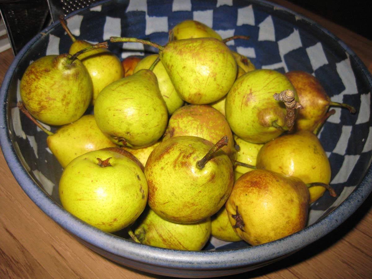 Birnen aus dem Garten beim Einkochseminar