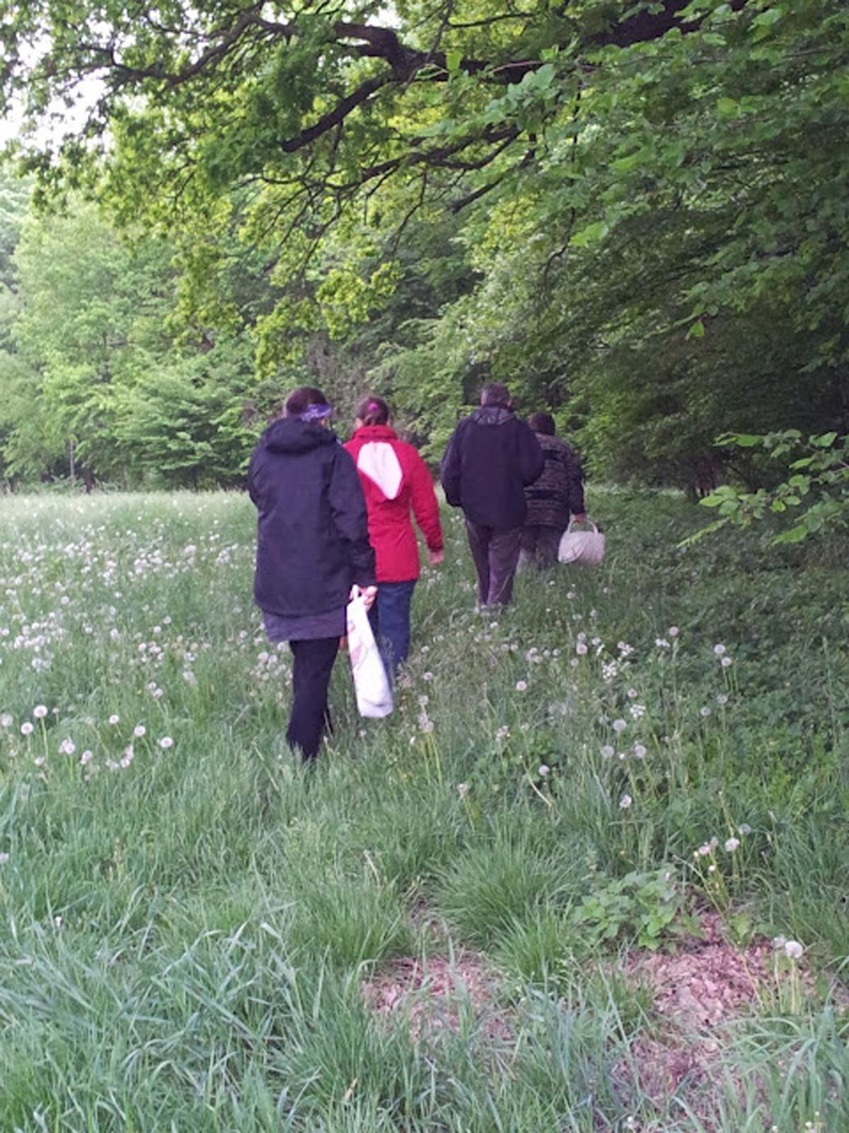 Kräuterwanderung im Rosental